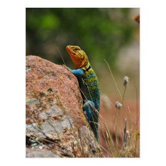 Colorful Lizard Postcard