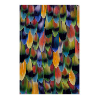 Colorful lovebird parrot feathers poster