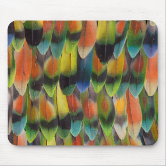 Colorful Lovebird Tail Feathers Mouse Pad