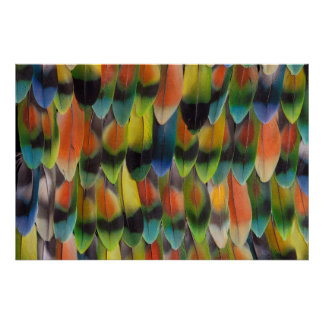 Colorful Lovebird Tail Feathers Poster