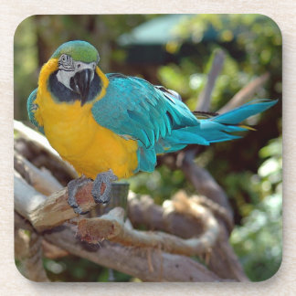 Colorful Macaw Beverage Coaster