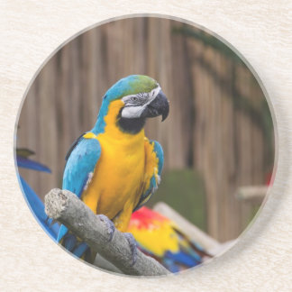 Colorful Macaw bird perched on the branch Drink Coaster