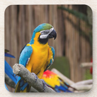 Colorful Macaw bird perched on the branch Coaster