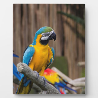 Colorful Macaw bird perched on the branch Display Plaque