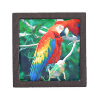Colorful Macaw Keepsake Box