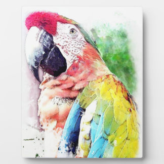 Colorful Macaw Painted Decorative Plaque Display Plaques