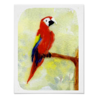 Colorful Macaw Parrot Art Poster