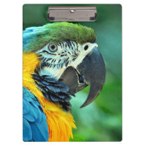 Colorful macaw parrot clipboard