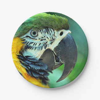 Colorful macaw parrot paper plate