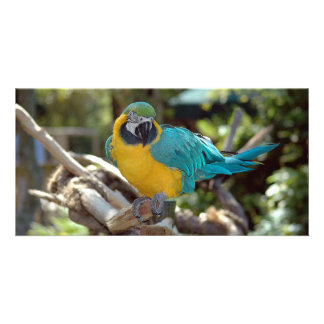 Colorful Macaw photo card