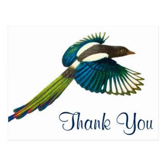 Colorful Magpie Bird, Vintage Illustration Postcard