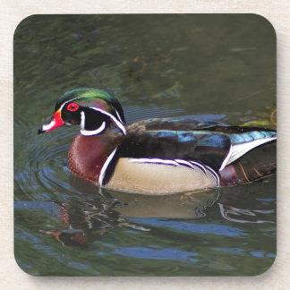 Colorful Male Wood Duck - Aix sponsa Coaster