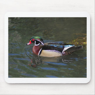 Colorful Male Wood Duck - Aix sponsa Mouse Pad