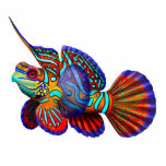 "Colorful Mandarin Fish Pin Cutout<br><div class=""desc"">Original fine art design of a colorful Mandarin fish by artist Carolyn McFann of Two Purring Cats Studio printed on a quality acrylic pin for coral reef aquarium fans.</div>"