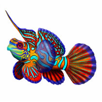 Colorful Mandarin Fish Pin Cutout