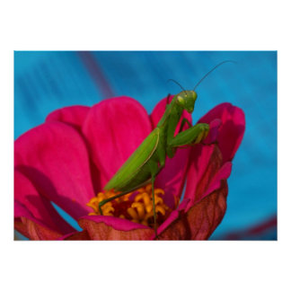 Colorful Mantis Poster