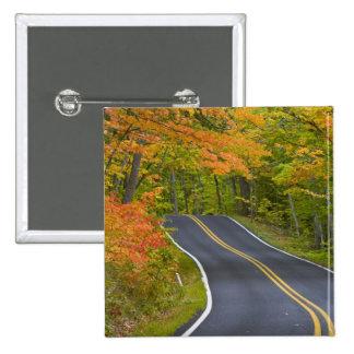 Colorful maple trees in autumn line scenic 2 inch square button