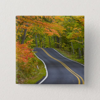 Colorful maple trees in autumn line scenic button