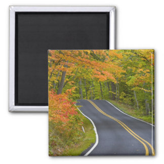 Colorful maple trees in autumn line scenic magnet