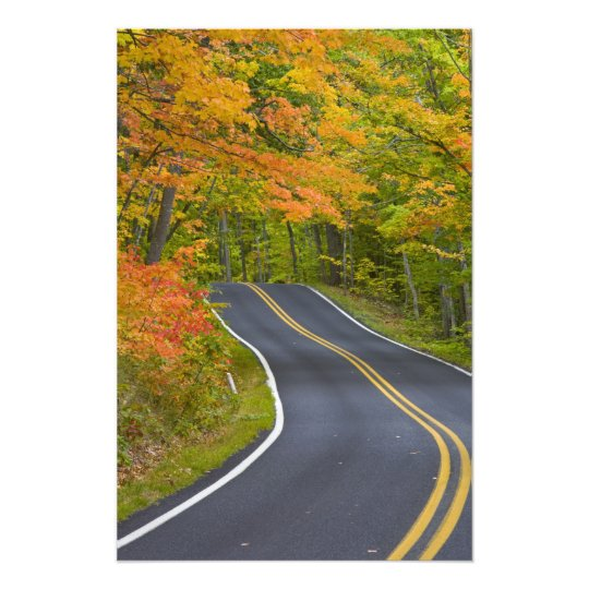Colorful maple trees in autumn line scenic photo print