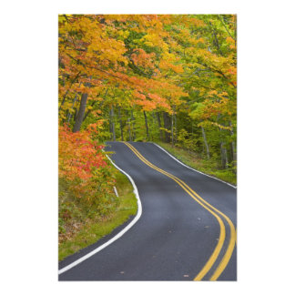Colorful maple trees in autumn line scenic photographic print