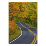 Colorful maple trees in autumn line scenic poster