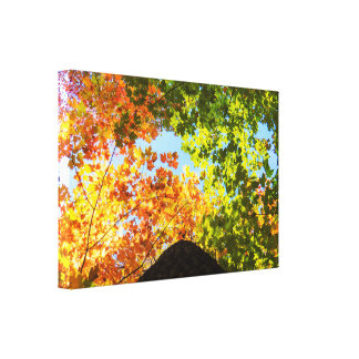 Colorful Maple Treetops Canvas Print