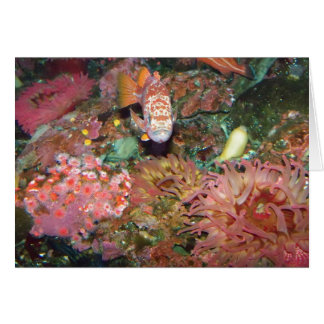 Colorful Marine Life Greeting Card
