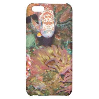Colorful Marine Life iPhone 5C Cases