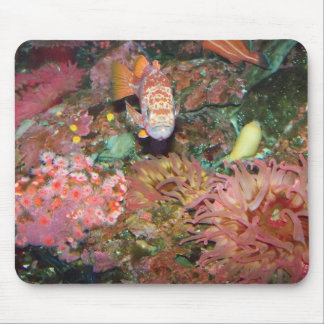 Colorful Marine Life Mouse Pad