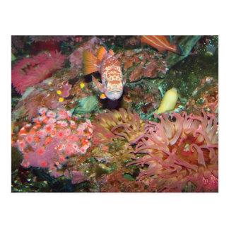 Colorful Marine Life Postcard