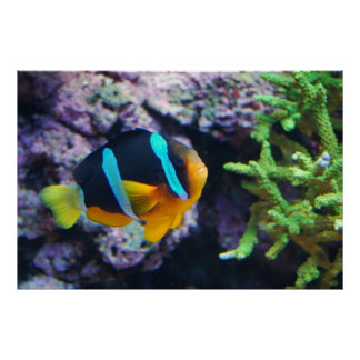 Colorful Marine Life Poster