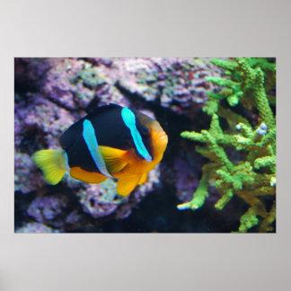 Colorful Marine Life Print