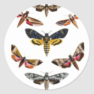 Colorful Moth Insect Natural History Art Classic Round Sticker