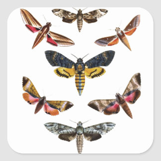Colorful Moth Insect Natural History Art Square Sticker