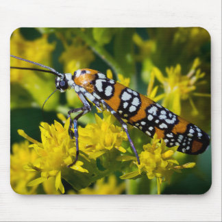 Colorful Moth Mouse Pad