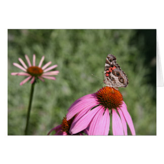Colorful Moth on Coneflower Card
