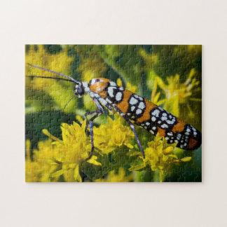 Colorful Moth Puzzle