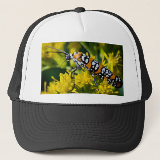 Colorful Moth Trucker Hat