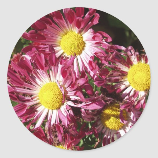 colorful mums classic round sticker