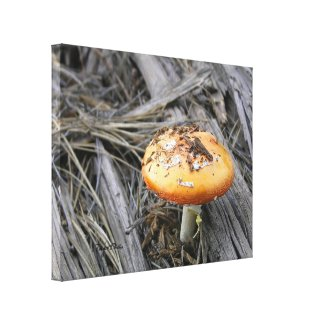 Colorful Mushroom Busting Through wrappedcanvas