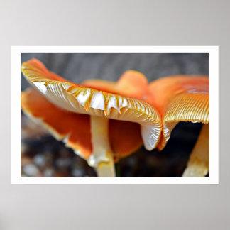 Colorful Mushrooms Posters