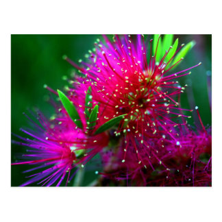 Colorful Nature Floral Hot Pink Neon Green Flowers Postcard