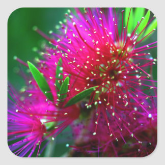Colorful Nature Floral Hot Pink Neon Green Flowers Square Sticker