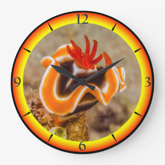 Colorful Nudibranch Great Barrier Reef Coral Sea Large Clock