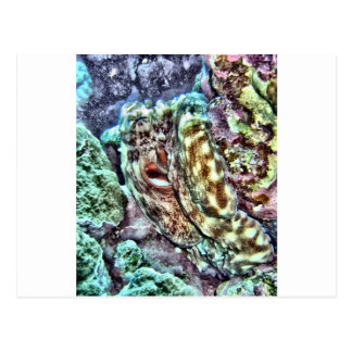 Colorful Octopus Postcard