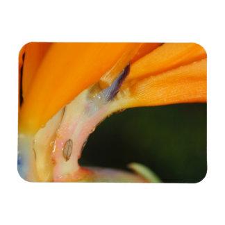 Colorful Orange Bird of Paradise Flower Magnet