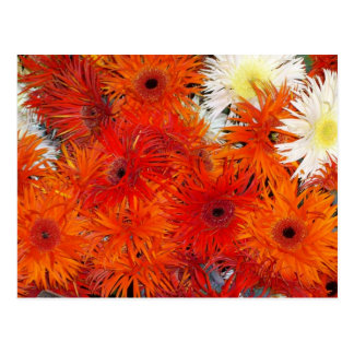 COLORFUL ORANGE FLORA POSTCARD
