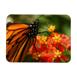 Colorful Orange Monarch Butterfly Magnet