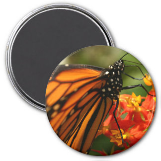 Colorful Orange Monarch Butterfly Photo Magnet